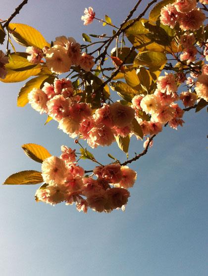 Blossom420w