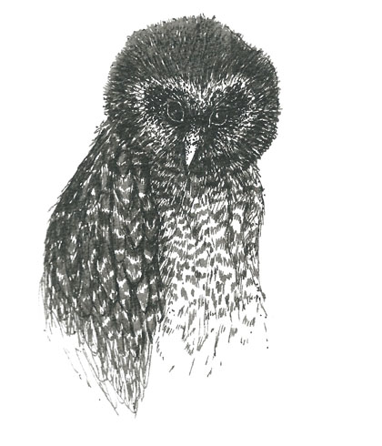 Owl pen and ink
